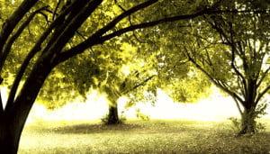 TreesBanner